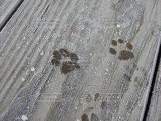 足跡の写真・画像素材[4159109]