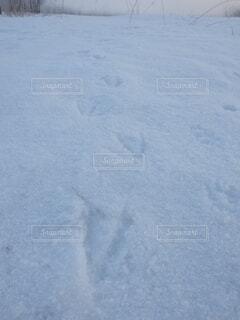 鳥の足跡の写真・画像素材[4159110]