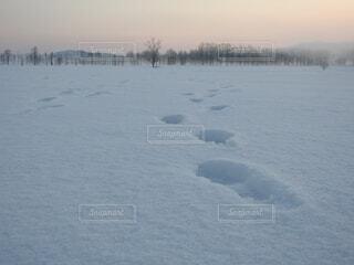 雪原を行くの写真・画像素材[4159113]