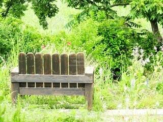 ハーブガーデンのベンチの写真・画像素材[4333760]