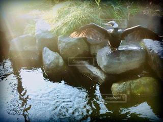 鳥,太陽,光,翼