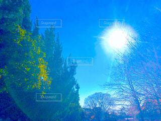 太陽光の写真・画像素材[2871532]