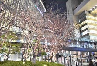 空,建物,夜,夜景,屋外,大阪,冬景色,イルミネーション,都会,高層ビル,クリスマス,歩道橋,シャンパンゴールド