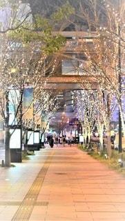 建物,夜,夜景,街並み,屋外,大阪,冬景色,樹木,イルミネーション,都会,道,クリスマス,歩道,明るい,グランフロント,シャンパンゴールド