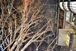 空,冬,夜,夜景,街並み,屋外,大阪,樹木,イルミネーション,都会,高層ビル,グランフロント,景観