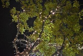 自然,空,夜空,木,緑,葉,ライト,光,樹木,イルミネーション,クリスマス,明かり,グリーン,草木,シャンパンゴールド