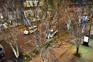夜,夜景,木,屋外,大阪,車,道路,樹木,イルミネーション,都会,明かり