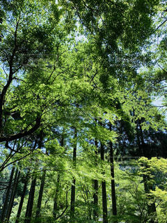 森の中の写真・画像素材[3174256]
