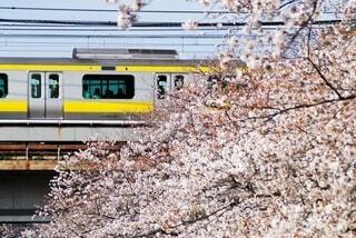 桜のトンネルを走るの写真・画像素材[4340321]
