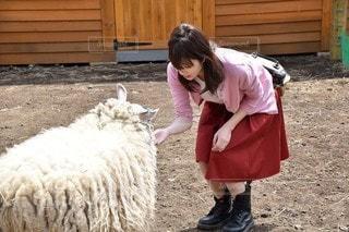 羊をかわいがる少女の写真・画像素材[2793163]