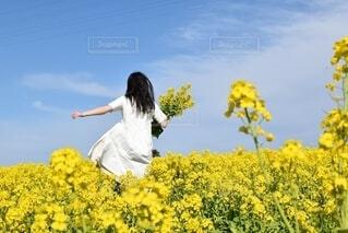 菜の花畑をお散歩の写真・画像素材[4274481]
