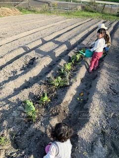 野菜に水をやる女の子の写真・画像素材[2814987]