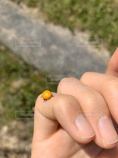 てんとう虫の指輪の写真・画像素材[2802594]