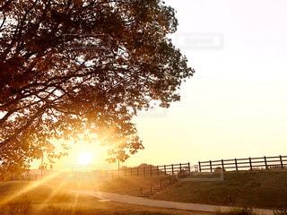 自然,空,公園,太陽,光,樹木,朝,日の出