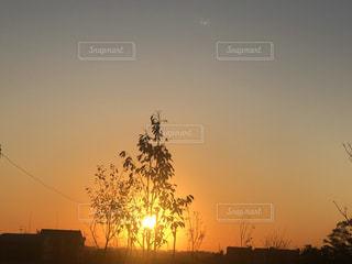 自然,風景,空,公園,太陽,光,樹木,日の出
