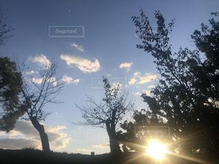 自然,空,屋外,太陽,光,散歩中,草木,クラウド