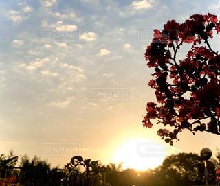 空,花,屋外,太陽,光,樹木,朝,草木,クラウド