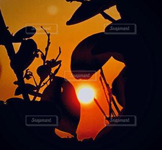 空,屋外,太陽,夕方,シルエット,光,隙間,草木