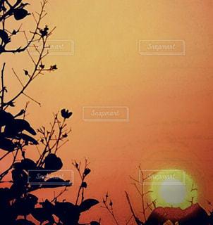 自然,空,太陽,夕暮れ,光,草木