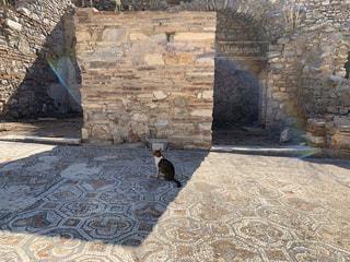 猫,動物,虹,ペット,人物,外,壁,遺跡,日陰,ネコ,ひかげぼっこ
