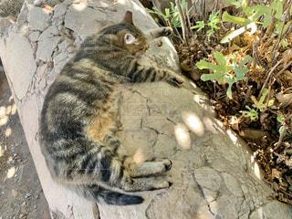 猫,動物,昼寝,ペット,人物,外,リラックス,木陰,日陰,ネコ,岩の上,ひんやり気持ちいい