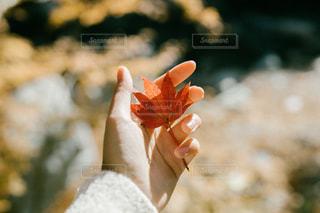 手には秋。の写真・画像素材[2805211]