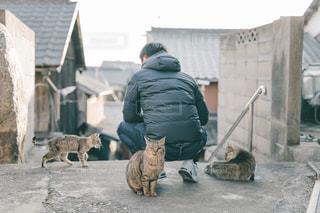 ひっつきネコの写真・画像素材[2971330]