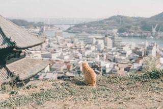 眺めるネコの写真・画像素材[2971331]