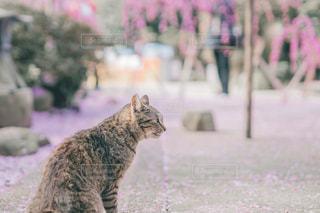 春色ネコの写真・画像素材[2971336]