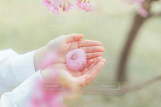 桜と桜餅の写真・画像素材[2971337]