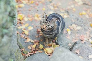 猫と秋の訪れの写真・画像素材[2971682]