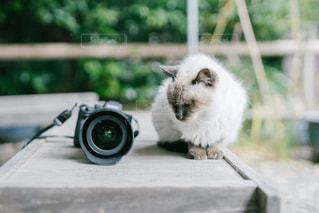 カメラと猫の写真・画像素材[2971690]