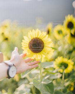 夏に触れるの写真・画像素材[3520666]