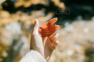 秋を掴むの写真・画像素材[3688931]