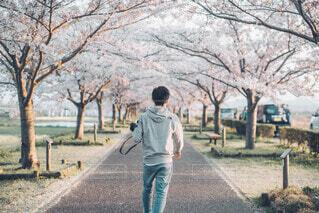 春の散歩道の写真・画像素材[4211916]