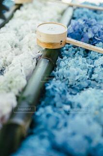 紫陽花の手水舎の写真・画像素材[4558493]