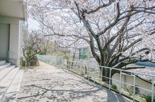 春の中庭の写真・画像素材[4638019]