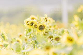 黄色い世界の写真・画像素材[4658285]