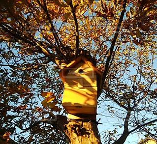 空,秋,夕日,屋外,太陽,夕焼け,栗,巣箱,葉,光,樹木,草木
