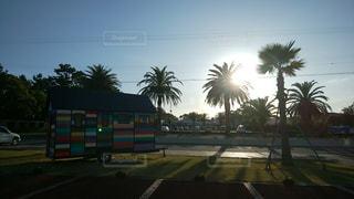 空,屋外,太陽,晴れ,晴天,光,樹木,道,ヤシの木,パーム