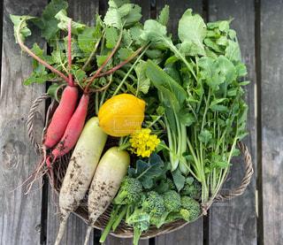 畑の野菜の写真・画像素材[2881701]