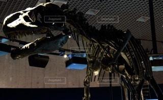アロサウルス②の写真・画像素材[3703612]