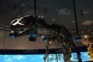 アロサウルスの写真・画像素材[3703615]
