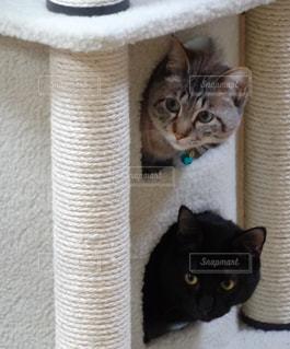 猫,動物,屋内,ペット,人物,見つめる,キティ,ネコ,探す,ネコ科の動物