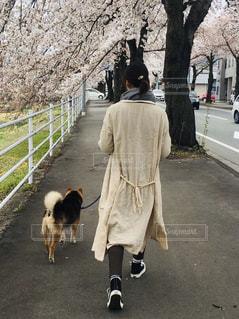 女性,1人,犬,桜,屋外,歩く,道路,桜並木,樹木