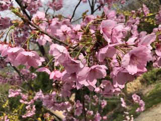 花のクローズアップの写真・画像素材[3077978]
