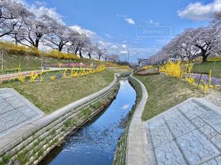 春の写真・画像素材[3078099]
