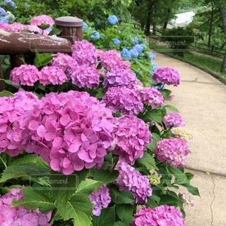 花園のクローズアップの写真・画像素材[3374615]
