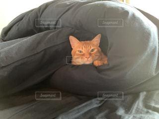 家族,猫,動物,屋内,ペット,人物,布団,ネコ,ベッド