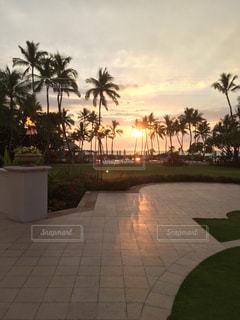 空,屋外,太陽,ビーチ,夕暮れ,光,ヤシの木,ハワイ島,草木,パーム
